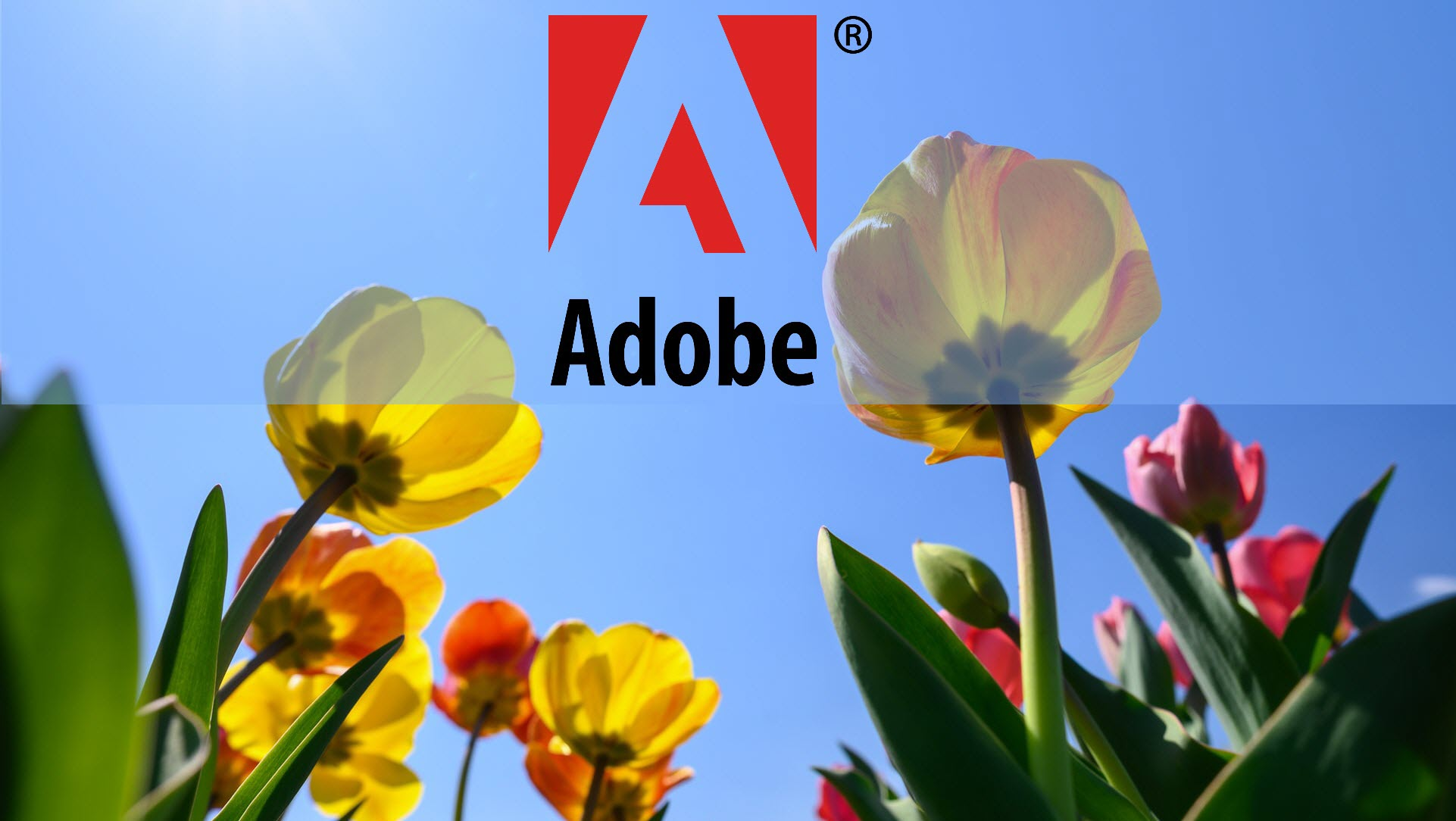 Adobe Analytics 2020 Spring Release is Right Here